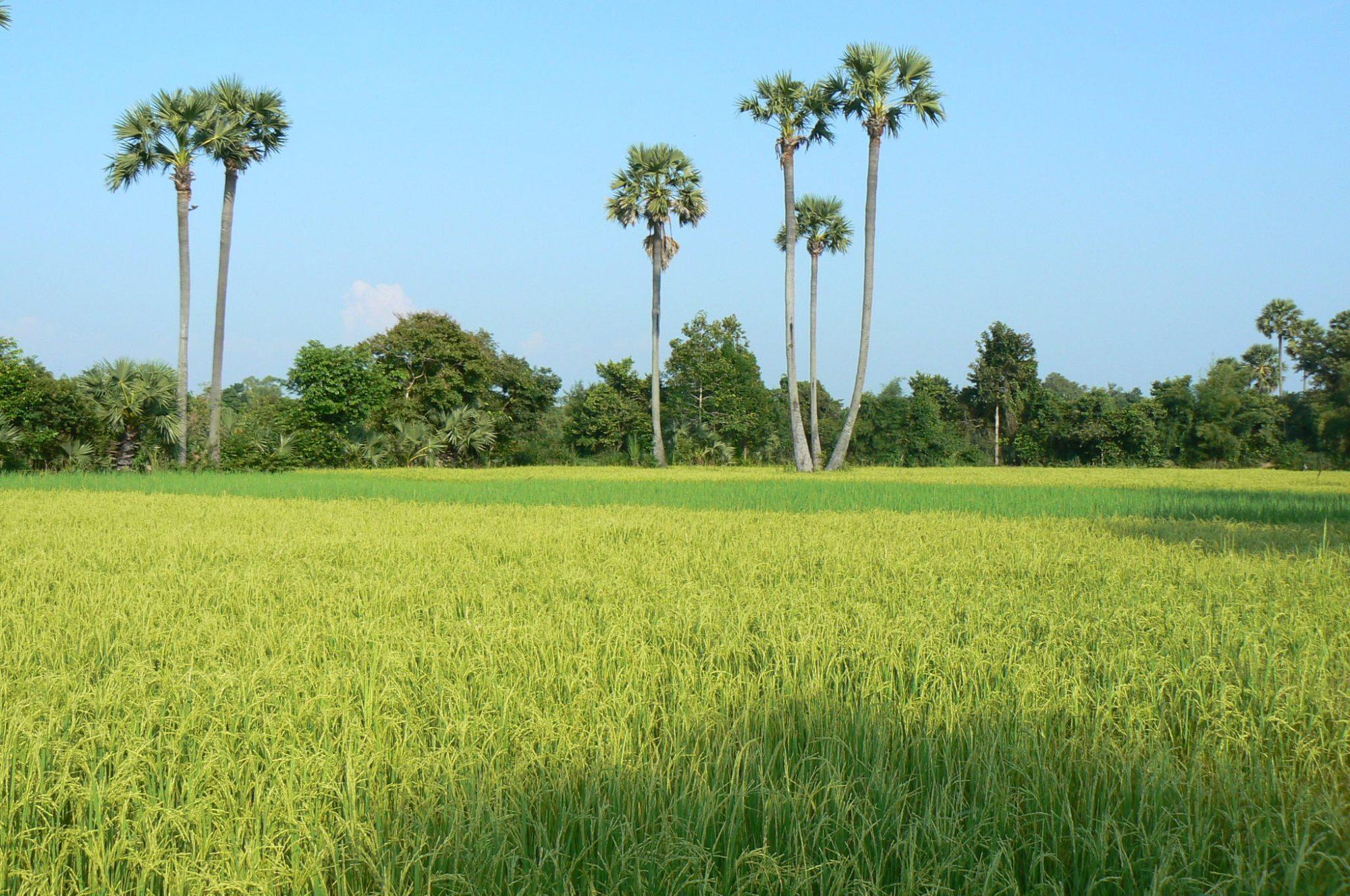 NhumBai Cambodia